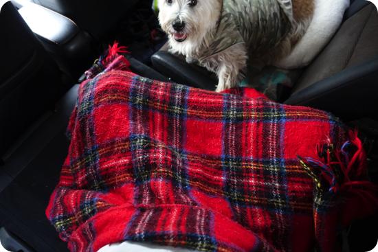 車中泊で電気毛布